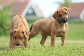Pups2 (2)