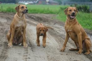 23-06-2007 Trio